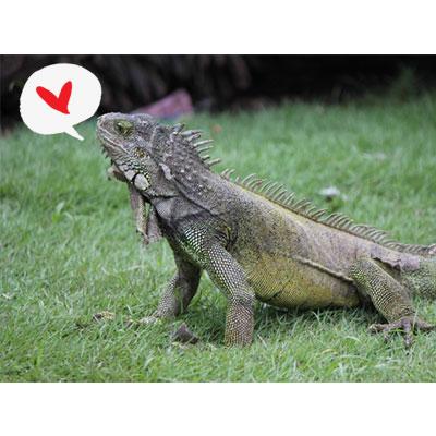 イグアナのスペルを知っていますか?